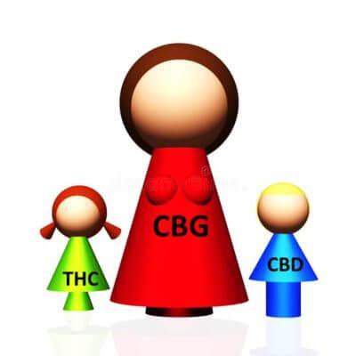 CBG Parent Cannabinoid